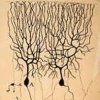 old neuron