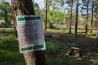 Cabinet tree disease