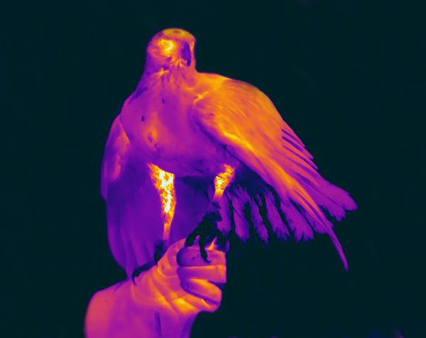 Verne hawk on hand22