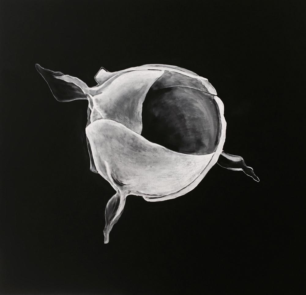 Chalk amoeba 1000 sm